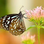 butterfly-small